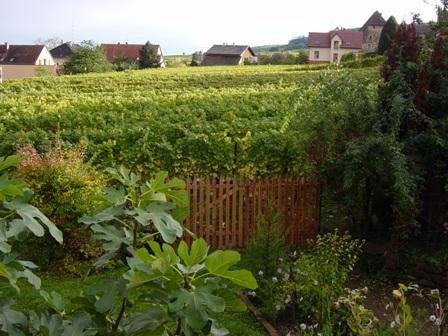 023_Ort_F_Gueberschwihr,2004-10-16_Garten, Ausblick